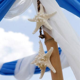 starfish canopy